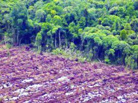 Greenpeace diz que política anti-ambiental do governo deve ser interrompida